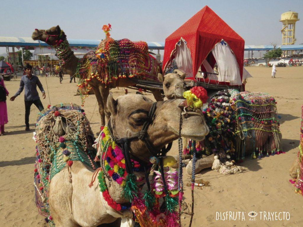 Pushkar: Festival de camellos.